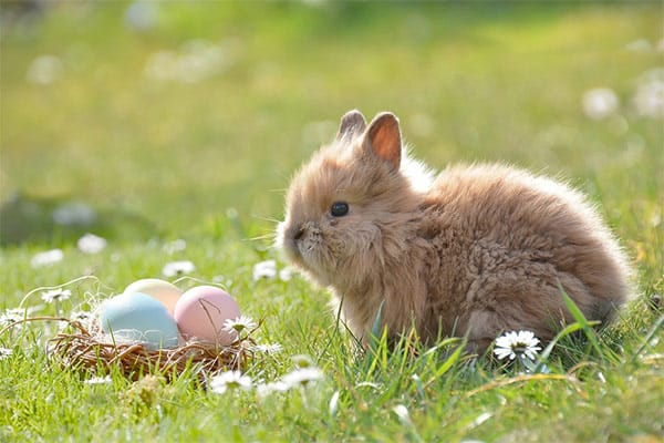 Cute baby Easter bunny with decorated eggs in a basket
