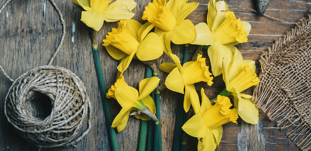 11 Delightful Daffodil Crafts for St David's Day