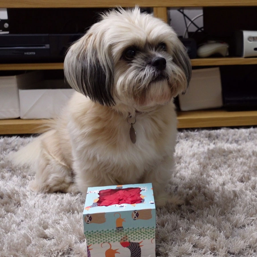 DIY Dog Puzzle Toys: Homemade Dog Enrichment Ideas